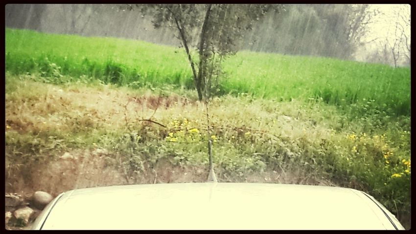 Rain Rain Day Rain☔ Rainy