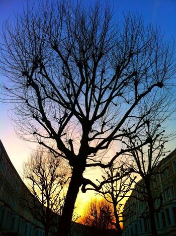 Trees Taking Photos London Skyporn