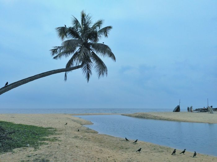 Coconut palm tree on beach Palm Tree Water Bird Tranquility Beach Tranquil Scene Sea Scenics Nature Calm Vacations Tourist TourismPalm Tree Beauty In Nature Landscape Picturesque India Kerala Copy Space Seashore Water Bird Animal Themes Tranquility