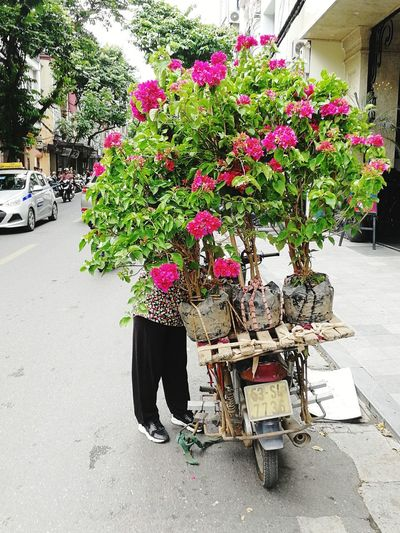 Bicycle Stall Market Traditional Vietnam Streetphotography HuaweiP9 P9 Huawei PhonePhotography Flower Plant In Bloom Growing Potted Plant Bicycle Rack The Street Photographer - 2018 EyeEm Awards