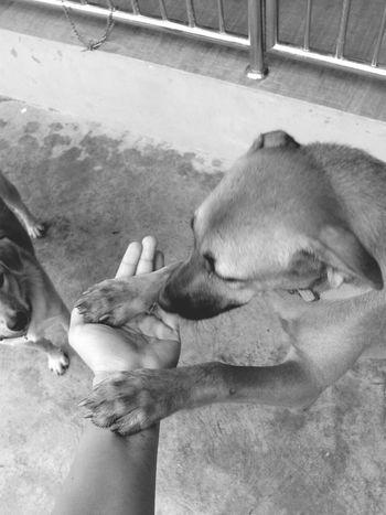 สอนมาดี good Dog DogLove