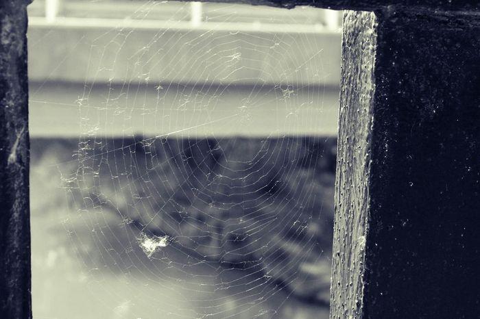 Spiderweb Taking Photos Taking A Walk Nature