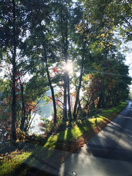 Relaxing Enjoying The Sun Autumn France Oise  Sunny Day Forest Taking Photos On The Road Again Enjoying Life
