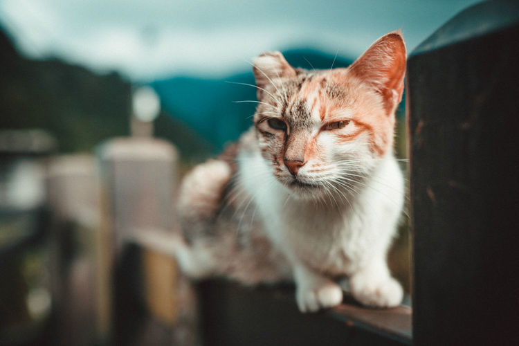 Close-Up Of Cat On Fence