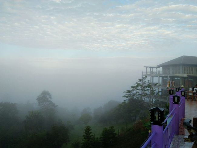 Tree Nature Beauty In Nature Outdoors Adults Only Mountain Day Sky No People Cloud - Sky Country Life Fog Foggy Morning Landscape ที่เขาค้อเพชรบูรณ์ Thailand Travel Photography