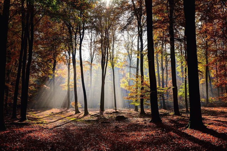 Sunbeam Streaming In Forest During Autumn