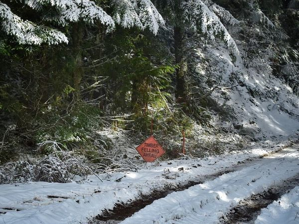 Snow Winter Cold Temperature Tree Nature Growth Outdoors Beauty In Nature Forest Day No People Scenics Environment Snow Covered Trees Road Logging Roads Logging Renewable Energy Winter Tree Weather Mountain Snow ❄ Nature