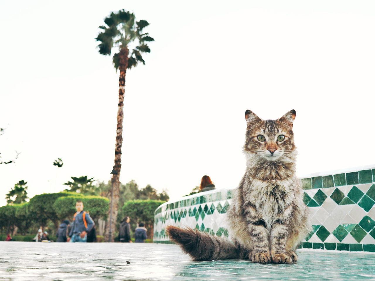 Portrait Of Cat In City