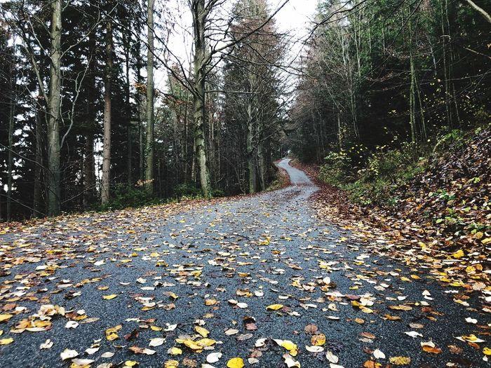 Road in autumn.