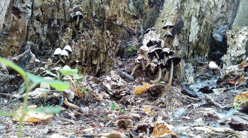 Full Frame Day No People Outdoors Close-up Nature Backgrounds Mushroom Mushrooms Fungi Fungus 🍄 Fungus Fungi On Tree Fungi On A Log Fungus Amungus Funghi Fungusphoto Fungi Growth Fungi Family