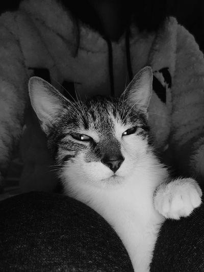 Qualité camera frontale pas piquer des hannetons 👌🏽 Croquette Minou Cat Repos  CalinsPilou Sofa