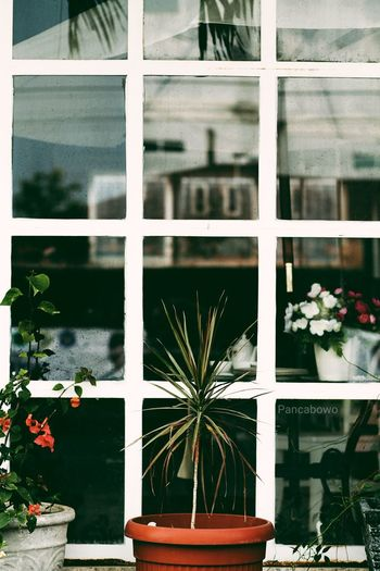 Home... Architecture Window Building Exterior Outdoors Nature Day No People Loveaceh Pancamedia Aceh, Indonesia Pilotdroneciletcilet Photography Myjob Vintage Decoration Design Plant