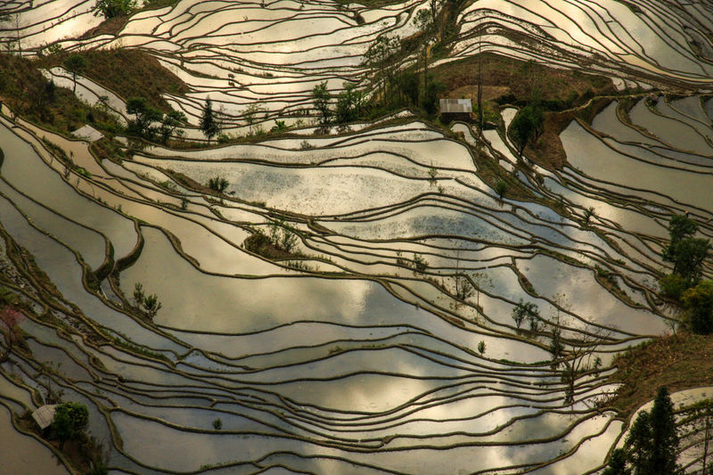 Agriculture China Golden Nature No People Outdoors Reflection Reflections Rice Rice Field Rice Fields  Rice Paddy Rice Terraces Sunset Tree World Heritage Yuanyang Yuanyang Terraced Fields Yunnan Miles Away Perspectives On Nature