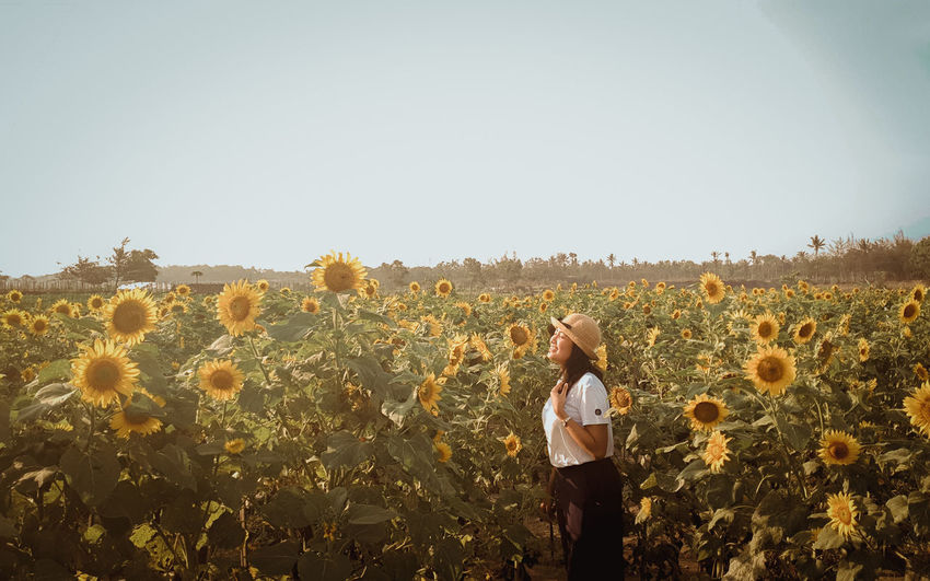 sunset Girl Girlfriend Love Laugh Happiness Holiday Vacations Cereal Plant Young Women Clear Sky Rural Scene Women Standing Agriculture Field Sky Plant Sunflower Pollen In Bloom Corn - Crop Flower Head Farmland Cultivated Land Countryside Crop  Blossom Single Flower