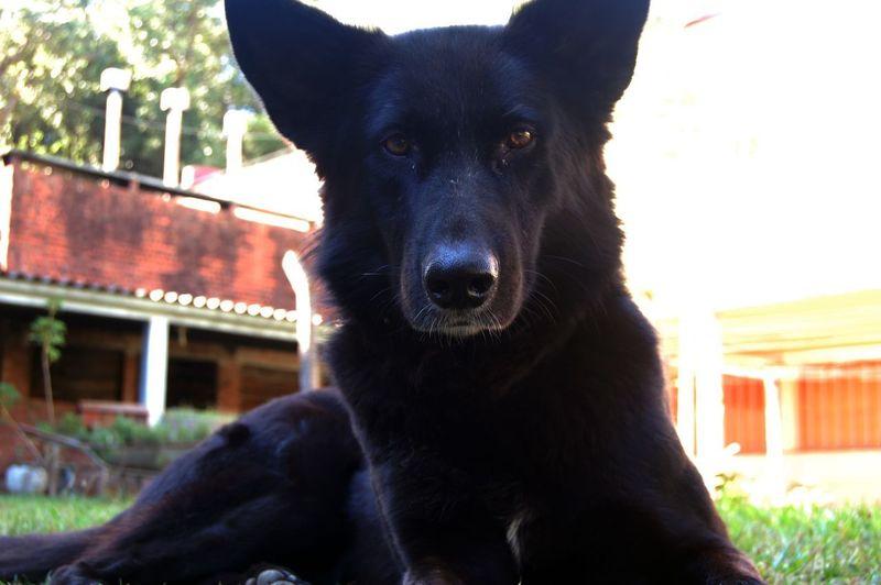 Portrait of black dog sitting outdoors