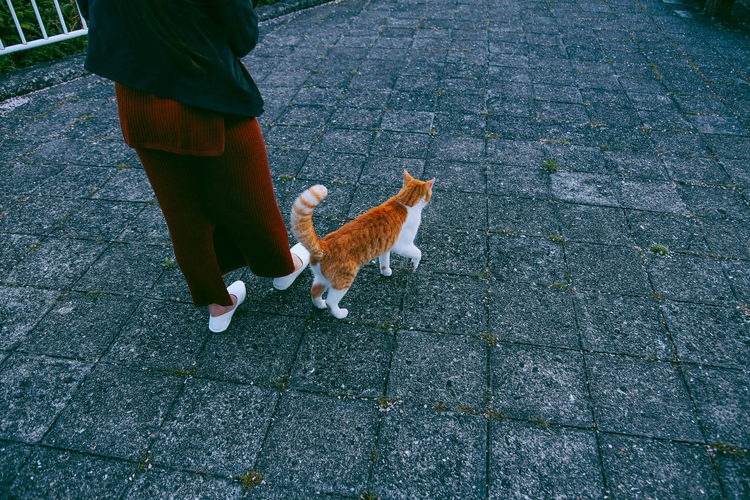 Low section of woman walking with cat on footpath
