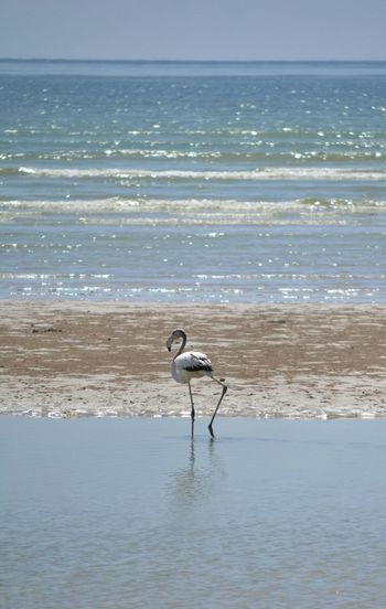 Bird Simple Simple Beauty Seaside Beach Nature Birds_collection Bird Photography Animals In The Wild Gorgeous