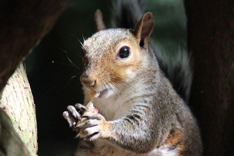 Squirrel Animal Animal Themes Mammal One Animal Animal Wildlife Rodent Animals In The Wild