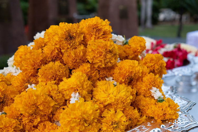 Close-up of yellow flowers in market for sale