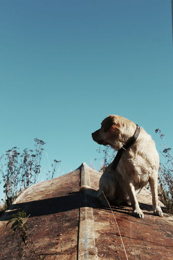 Pets Dog Full Length Representing Sky