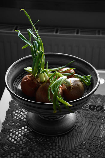Scallions Growing In Container On Table At Kitchen