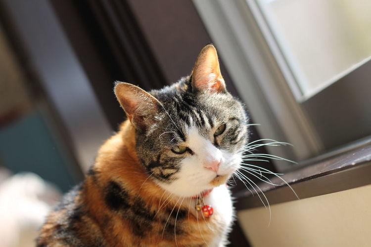 ねこ Cat Pet 哀愁