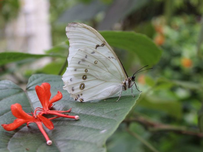 White Bugslife EyeEm Nature Lover CanonT6 Nofilter Noedit Wildlife & Nature Canonphotography Flowers