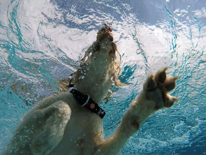 Close-Up Of Dog In Swimming Pool