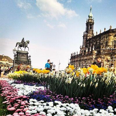 Flowers in Dresden Saxony Germany Deutschland Insta_europe Instagermany Ig_deutschland