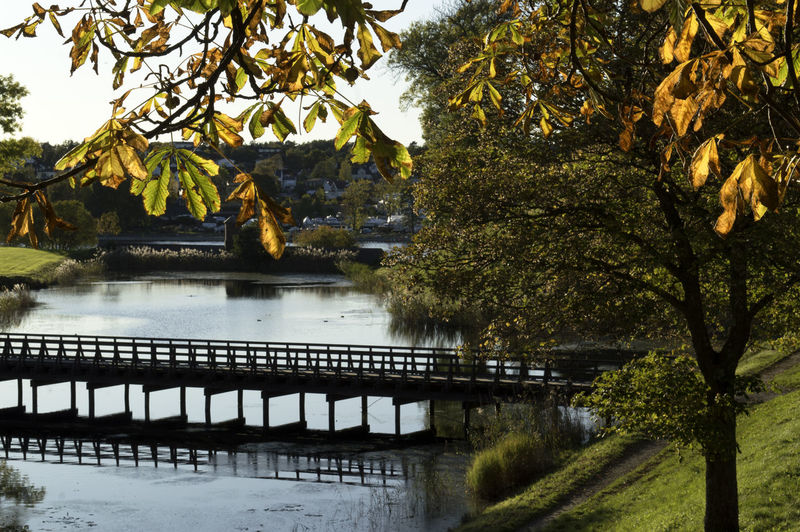 Bridge over autumn water.. Old city of Fredrikstad. Autumn EyeEm Nature Lover EyeEm Gallery The Week On EyeEm Architecture Beauty In Nature Branch Bridge - Man Made Structure Built Structure Close-up Day Growth Leaf Nature No People Outdoors River Scenics Sky Tranquility Tree Water The Great Outdoors - 2018 EyeEm Awards