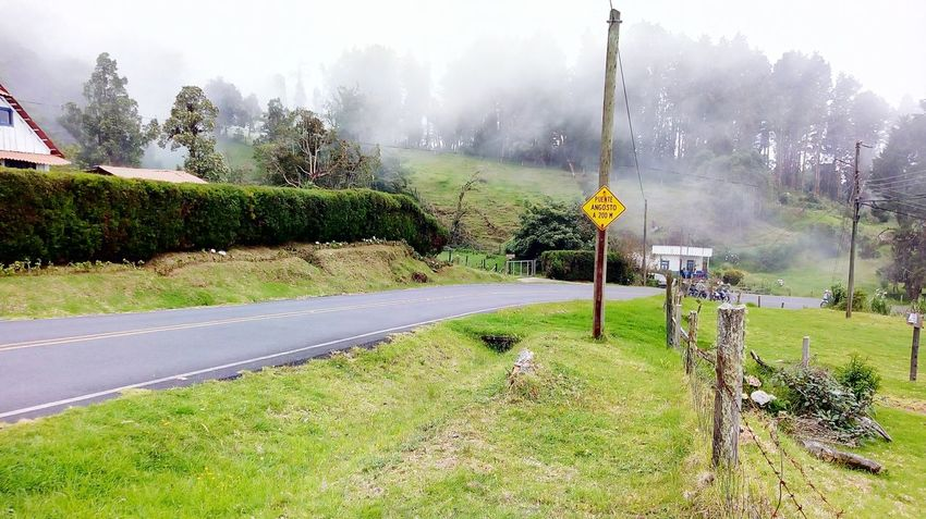 Costa rica, Alajuela Agriculture Outdoors Flower Grass Rural Scene Day Beauty In Nature