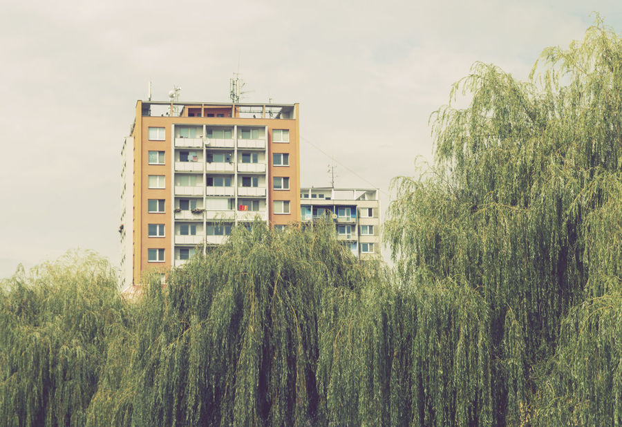 Seventies tenement buildings and willow trees in Czech Republic 70's Architecture Architecture Building Building Exterior Buildings Built Structure Contrast Day Growth High-Rise Highrise Nature No People Plant Residential Building Retro Seventies Tenement Tree Trees Vintage Vintage Style Willow Tree