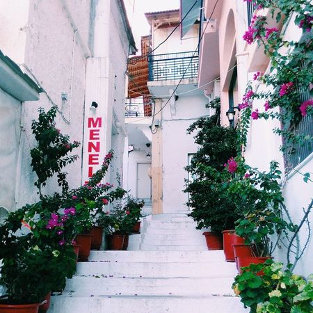 Lovely entrance Greece Thassos Thassosisland Travelgram Tedooro Latergram Everydayinpics Ethnic Emojisinthewild Enjoythesun Enjoythewhite Amazing Vscogrid Vscofeature VSCO Vscocam VSCOPURE Photography Pickldmedia Pickld Flowers White Simple September