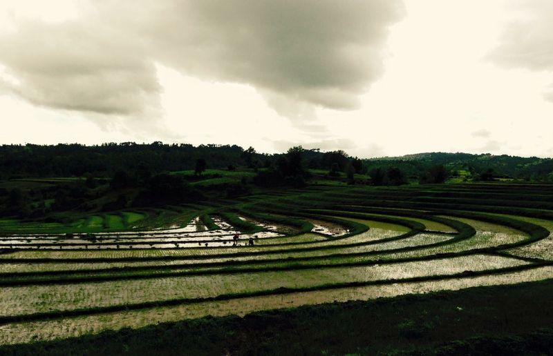 Indigohilltribe Myanmar Burma Trekking EyeEmNewHere Cloud - Sky Sky Landscape Environment Rural Scene Plant Agriculture EyeEmNewHere
