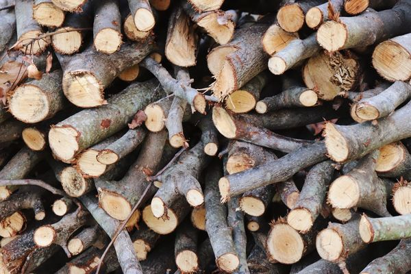 Timber Log Stack Lumber Industry Woodpile Deforestation Wood - Material Large Group Of Objects Abundance Heap Full Frame Backgrounds Forestry Industry No People Pile Arrangement Fuel And Power Generation Textured  Day Close-up