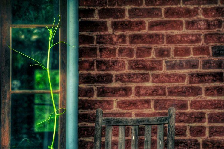 The Vine Check This Out Hanging Out Taking Photos Random Randomshot Randomness Plant Plants Plants 🌱 Brick Brickporn Brick Wall Nikon Nikonphotography Eyeemphotography EyeEm Best Shots Beautiful Artistic Photo
