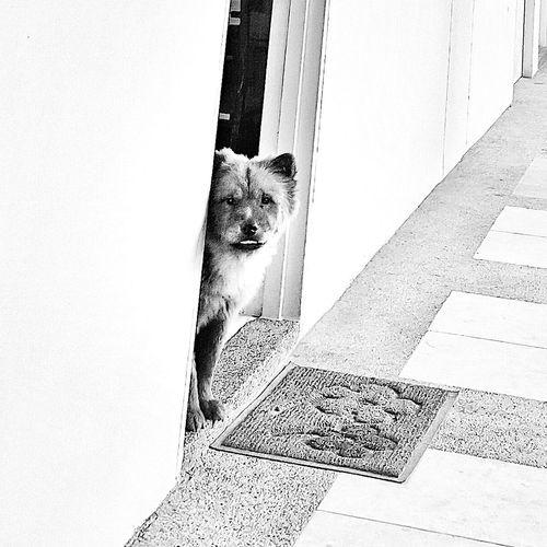 Always a loyal friend Visualstoryteller Photography Dogstagram Dogs Of EyeEm