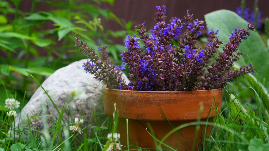 Beauty In Nature Close-up Day Field Flower Flower Head Flower Pot Flowering Plant Focus On Foreground Fragility Freshness Gardening Green Color Growth Lavender Nature No People Outdoors Petal Plant Potted Plant Purple Selective Focus Vulnerability