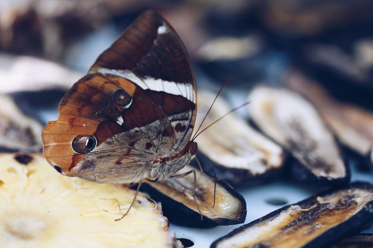 Close-Up Of Butterfly On Oyster