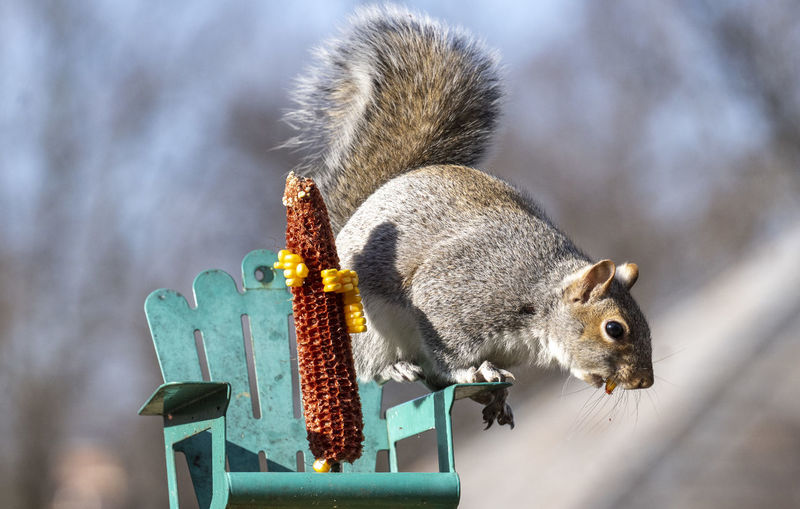 Low angle view of squirrel eating