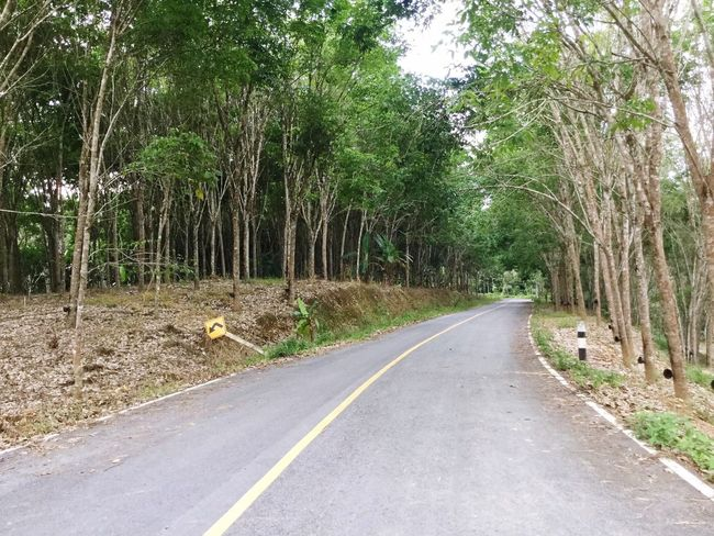Thailand Forest Southern Tree The Way Forward Road Day Nature Outdoors Freshair