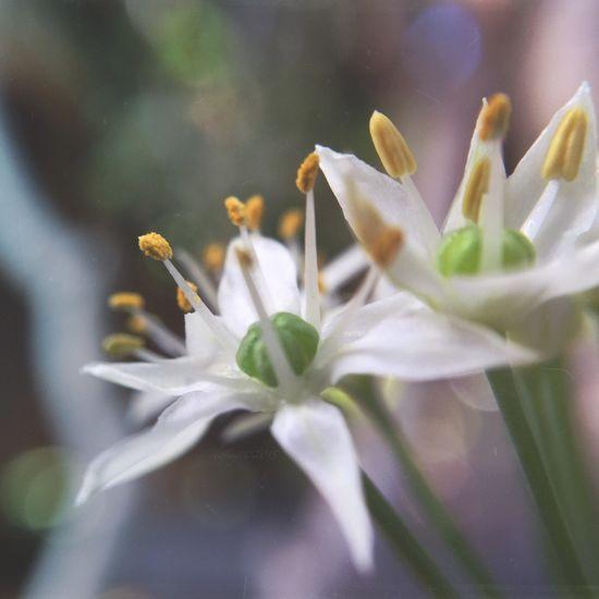 ✨🌾 Tadaa Community IPhoneography Olloclip Olloclip_macro Flowerporn Herbalitious Macro