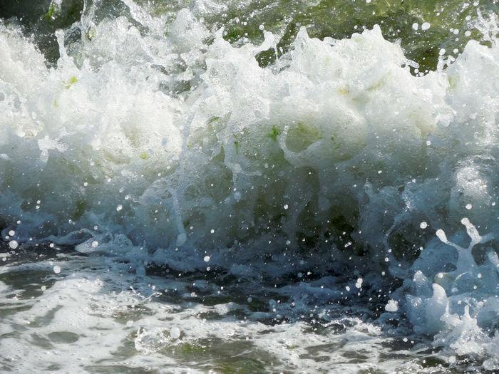 Power Shells🐚 Aquatic Plants Beauty In Nature Nature Sea She Shells Beach Tiny Shells Water Wave