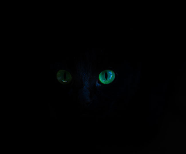 Portrait of cat in the dark
