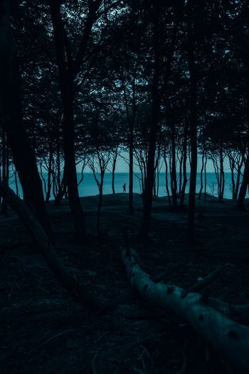Nocturnal Animal. Sea Ocean Seaside Ozark Ozarks Dark Silhouette Quiet Blue Dusk Night Tree Plant Land Nature Forest Tranquil Scene Outdoors Scenics - Nature