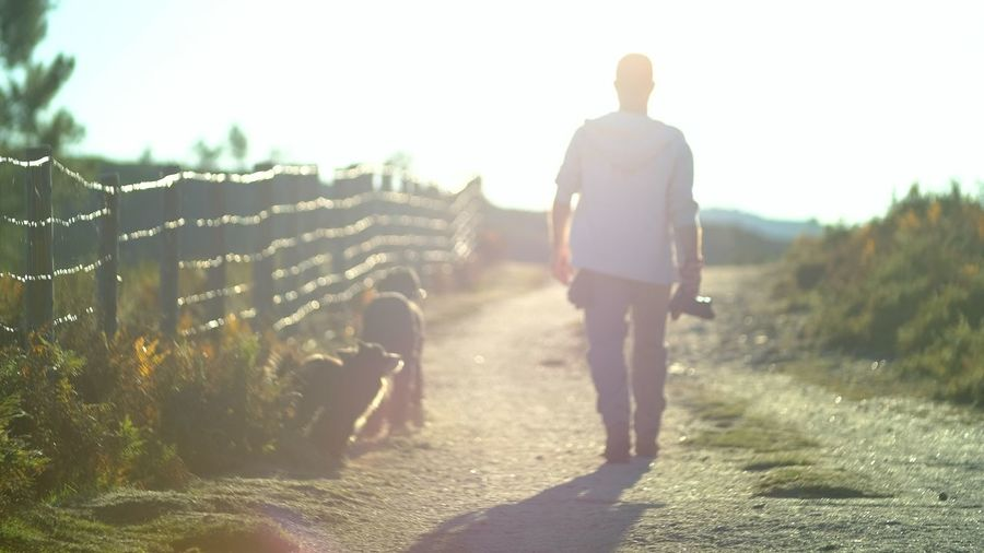 Relax Dogs Nature Adult Day Flare Full Length Lifestyles Men Nature One Person Outdoors People Real People Rear View Road Sky Sunlight Walking