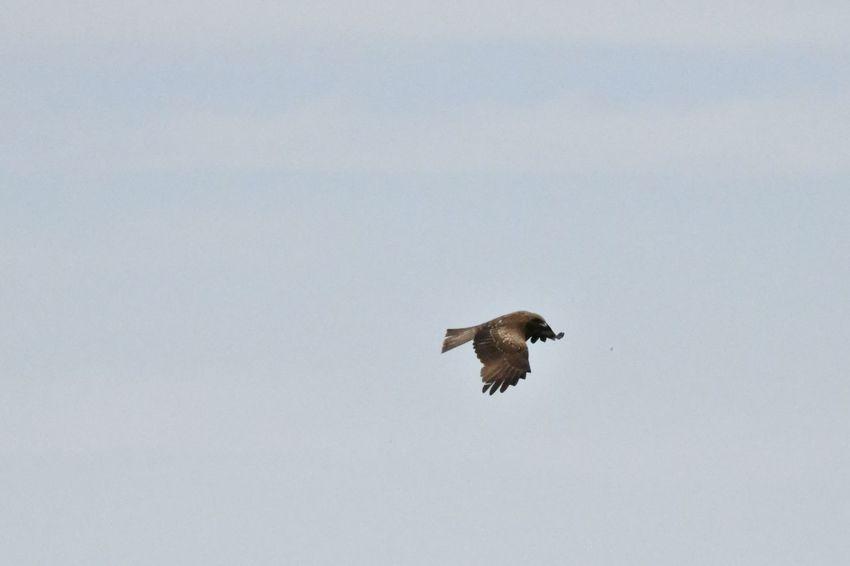 One Animal Animals In The Wild Animal Wildlife Animal Themes Vertebrate Animal Flying