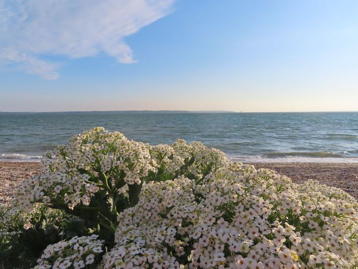 Blind Photographer Sea Water Beauty In Nature Sky Horizon Over Water Horizon Scenics - Nature Tranquility Tranquil Scene Plant Nature Flower Beach Idyllic Outdoors No People