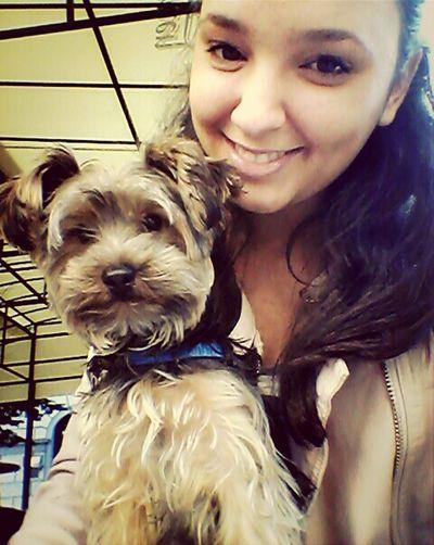 Enjoying Beautiful Day My Dog And I♥ Simba Yorkshire Terrier♡