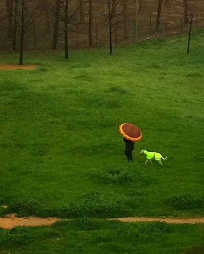 View From The Window... Rainy Days Grass Umbrella Dog Green Color Pets Real People Field Lifestyles Leisure Activity Nature